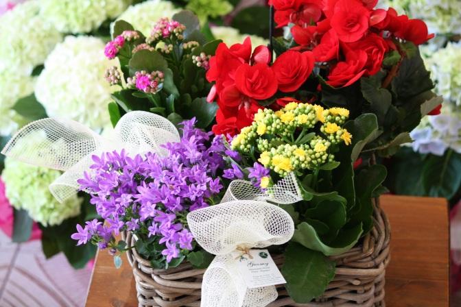 Domingo 3 de mayo día de la Madre. Lo mucho que quieres a Mamá díselo… con flores